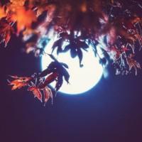 Tsukimi e la Festa della Luna di Mezzo Autunno