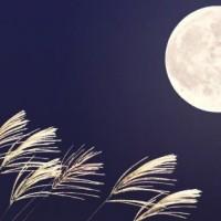 Tsukimi: Festa della Luna di mezzo Autunno