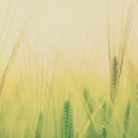 Lammas - La Festa del Raccolto