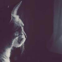 Il Gatto - Il nostro Guardiano Spirituale