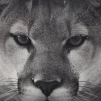 Iniziazione della Vera Donna - Entra nel Tempio del Puma